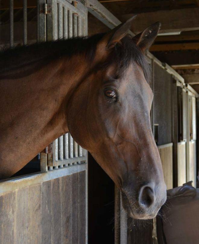horse Roudy