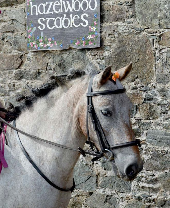 Pony Dory Hazelwood Stables