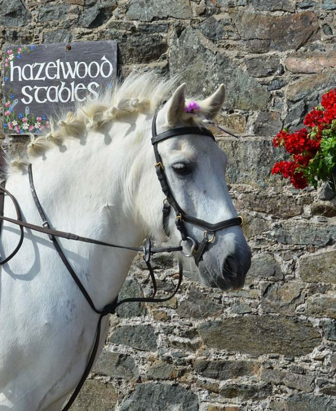 Pony Gerry at Hazelwood Stables