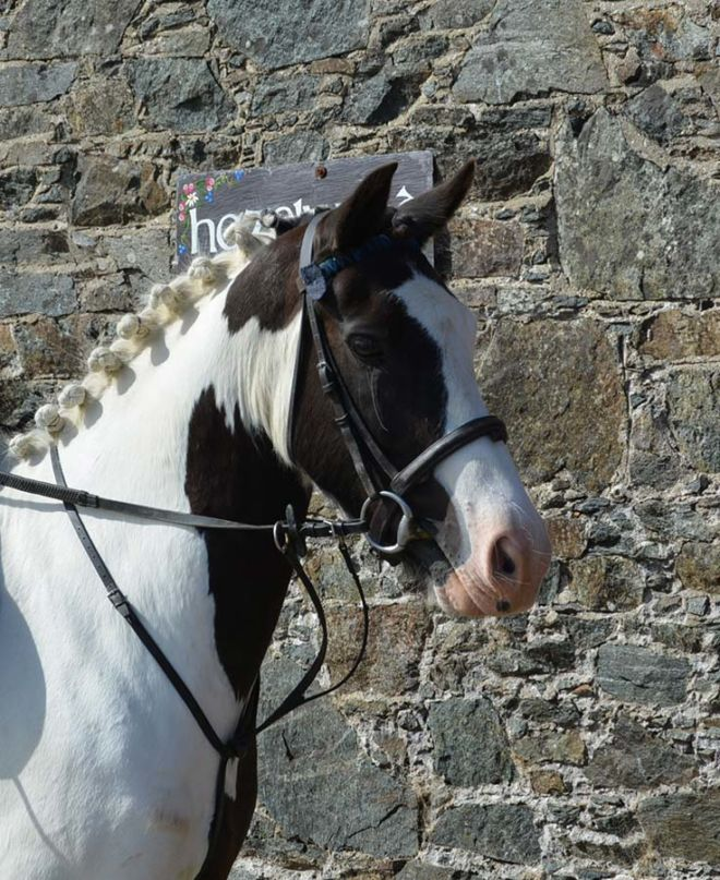 Harry pony at Hazelwood Stables