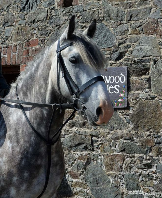 Horse Blue at Hazelwood Stables