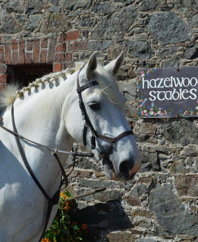 Pony Matilda at Hazelwood Strables