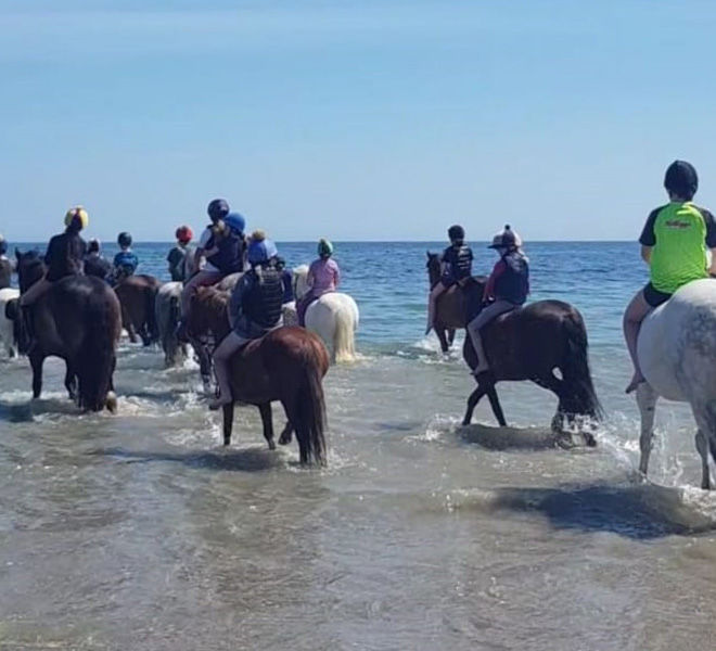group of ponies walking into the water