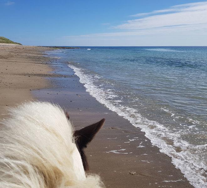 beach trek view from a horse back