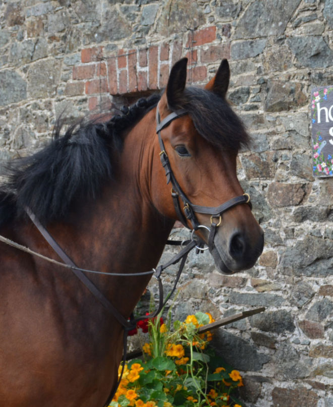 horse Yogi from Hazelwood Stables