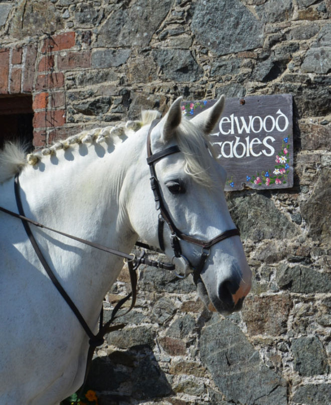 horse Matilda from Hazelwood Stables