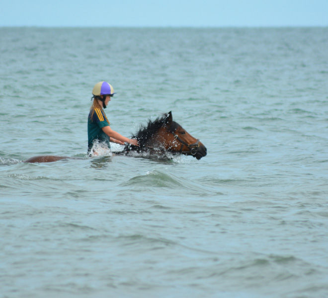 swimming-horses-hazelwood-stables-6
