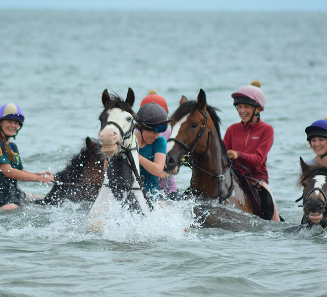 swimming-horses-hazelwood-stables-8
