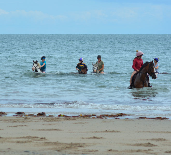 swimming-horses-hazelwood-stables1